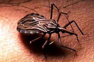 El Conicet desarrolla nuevas alternativas para tratar el Chagas