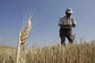 El Gobierno acordó beneficios para pequeños productores de trigo y soja