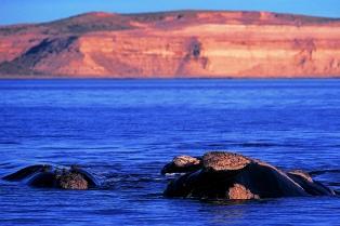Ponen en marcha un plan de limpieza costera en la península Valdés