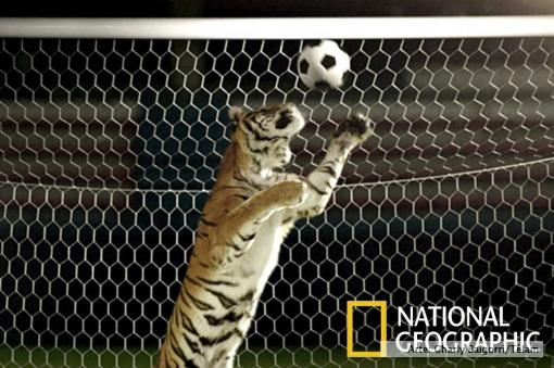 """Antes del Mundial, NatGeo estrena la serie """"Fieras del Fútbol"""""""