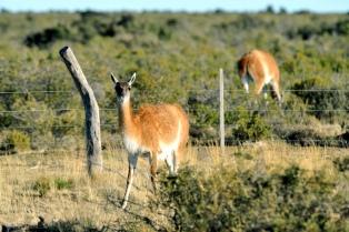 El gobierno cedió terrenos fiscales a una ONG dedicada a preservar la fauna autóctona