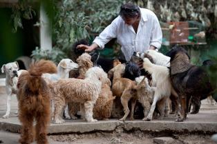 Disponen la creación de cuchas públicas para unos 30.000 perros abandonados