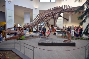 Bautizaron con el nombre de Patagotitan Mayorum al dinosaurio más grande que habitó el planeta