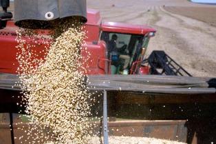 Las divisas por exportaciones de granos totalizaron US$ 13.504, 36 millones en lo que va del año