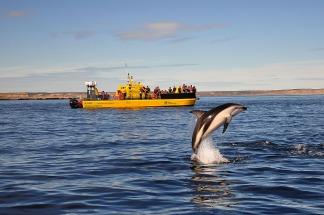 avistaje de delfines