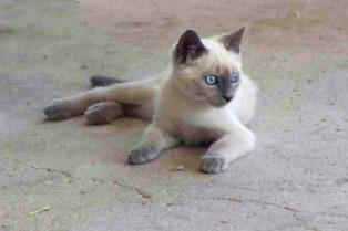 Detectan brucelosis en felinos por primera vez en Argentina