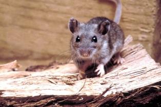 Intensificaron la concientización en Epuyén para prevenir el hantavirus