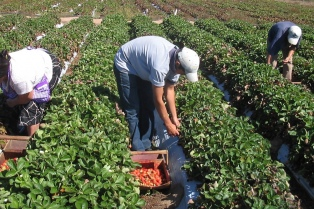 Anunciaron créditos para fruticultores en Neuquén