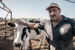Por la sequía, suben los costos para los productores de leche y de carnes