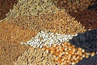 El juez Casella indicó que se debe respetar la Contitución con respecto a la ley de semillas