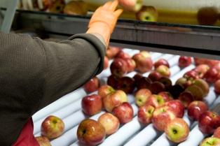 Las exportaciones de manzanas a Brasil cayeron un 58,4% interanual entre enero y agosto