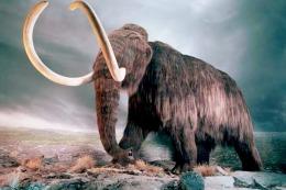 """Los mammuts se extinguieron por """"un abrupto calentamiento global"""""""