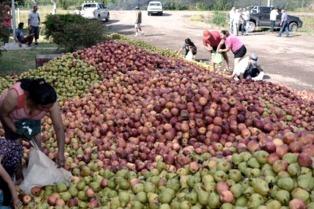 Buscan aumentar a 400 gramos diarios el consumo de frutas y hortalizas