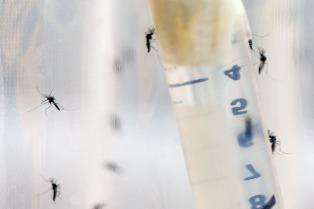El gobierno porteño lanzó un plan para la prevención y control del dengue