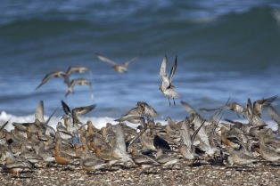 Las playas de la provincia  ofrecen gastronomía, pesca y precios promocionales en Semana Santa