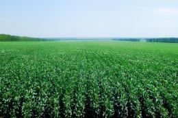 Alta volatilidad en la cotizaci�n de granos por el perfil de