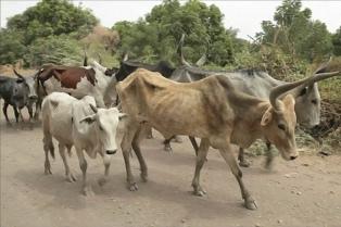 Impulsan la declaración de emergencia agropecuaria por la sequía