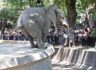 Los zoológicos tradicionales del Cono Sur dan un giro hacia bioparques y reservas