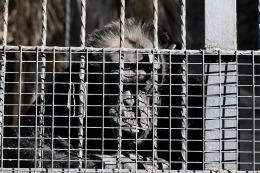 Mendoza: tras la muerte de 60 animales, piden frenar los remates del Zoo