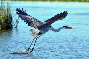 La ONG Aves Argentinas y el Ministerio de Turismo insertan a la provincia como destino natural