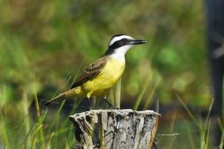 Corrientes apuesta a desarrollar el turismo de observación de aves