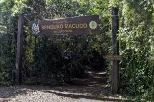 Una familia se cruzó con un puma y cerraron un sendero del Parque Nacional Iguazú