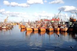 Disponen el cierre de la temporada de pesca del calamar hasta mayo de 2017