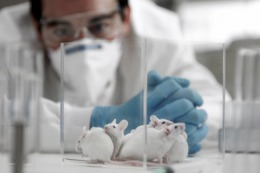 Especialistas prueban en ratones un tratamiento para el c�ncer de mama