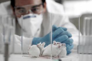 Logran mejorar la función cognitiva en ratones con alzheimer en forma temporaria
