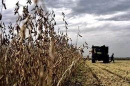 Extienden a cinco a�os el plazo para liquidar divisas por exportaciones del agro