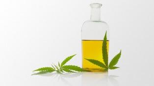 Países de la región avanzan con la legalización del cannabis medicinal
