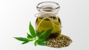 La obra social de empleados públicos comienza a entregar aceite de cannabis medicinal