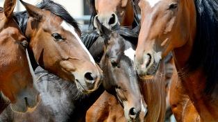 China comenzará a comprar caballos sangre pura de carrera tras el G20