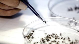 Refuerzan medidas de prevención tras 17 casos de zika y 5 de dengue