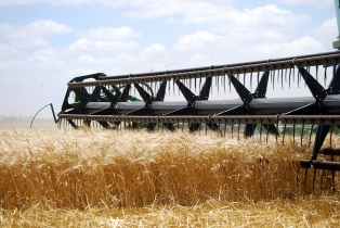 Las exportaciones de alimentos crecieron 17,6% en el primer semestre