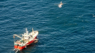 Sancionan a buques pesqueros por superar el límite de captura de abadejo