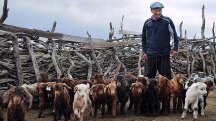 El INTA logró extender a 30 días la vida útil de la leche de cabra