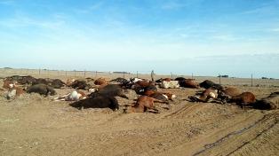 Más de 200 vacas murieron intoxicadas por un herbicida