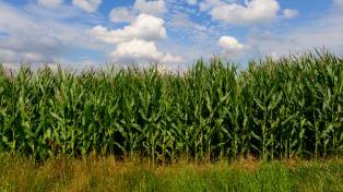 El ministro de Agricultura mostró interés en comprar maíz a la Argentina