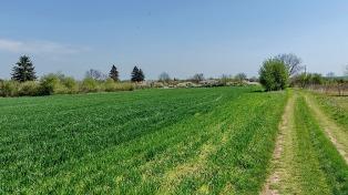 La AFIP creó un registro fiscal de tierras rurales explotadas