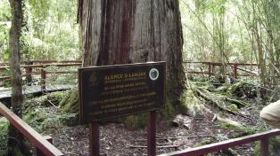 Un bosque de árboles milenarios corona el Parque Nacional Los Alerces