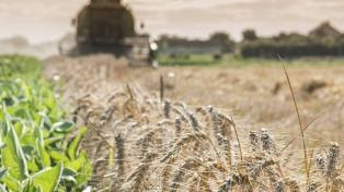 Destacan buenos rendimientos de trigo y cebada en el comienzo de la cosecha