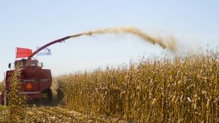 Aumenta a 57 millones la estimación de la cosecha de maíz y se consolida la campaña récord
