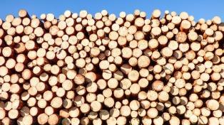 El costo anual de la corrupción forestal en el mundo es de US$ 29.000 millones