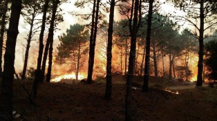 Estiman que la recuperación del bosque llevará 30 años