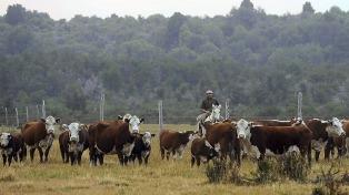 Los precios de la carne vacuna crecieron 0,8% en diciembre y 39,1% interanual