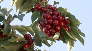 Entregarán créditos por $6 millones a productores frutíhortícolas afectados por el granizo