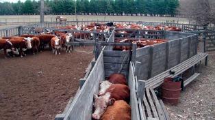 El Rosgan rematará 18.000 cabezas de ganado