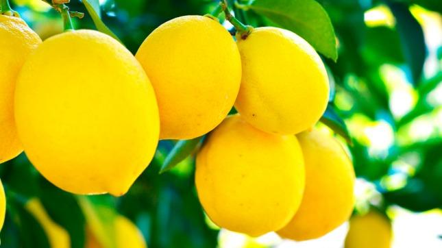Se concretó el primer envío de limones argentinos a Brasil