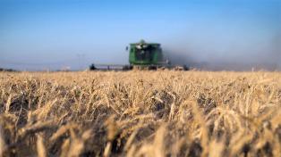 Estiman una producción de trigo superior a los seis millones de kilos durante 2018